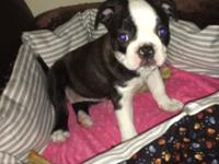 Ready to go to her forever home..beautiful female Bugg