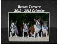 18 MONTH BOSTON TERRIER CALENDAR ONLY $19.99! This