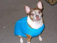 Boston Terrier - Dolly - Small - Senior - Female - Dog