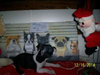 we have 7 boys they are 8 weeks old born on 10-20-14