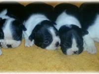 Beautiful puppies all set for their permanently houses.