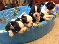 2 females and 2 males, 6 weeks old, will be 8 weeks on