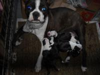 really nice litter of pups males and females alot of