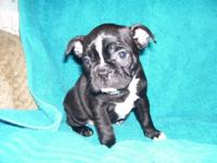 LITTER IS SOLD ** Contact us for your next young puppy,