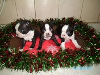 i have 3 litters that will be ready between dec 12th