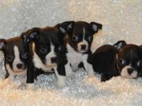 Great pups they are up to date, pups come with a