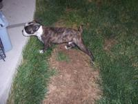 Boston Terrier Puppies - Purebred - Born 03/18/12. Only
