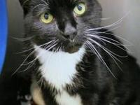 Bosty's story Say hello to Bosty! A quiet and calm guy,