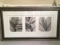 Two beautiful, professionally framed photos (x-ray-like