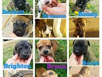 Bouncing B litter's story These cutie pies are so much