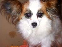 I have a really adorable Papillon Dog that I want to
