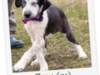 Bow was rescued from Brookhaven, MS. He is 2-3 months
