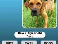 Bow's story Bow is 8 years old and is also choosy of