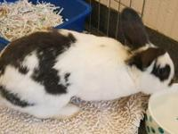 Bowie is a friendly, house trained rabbit accustomed to