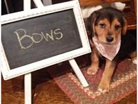 Bows's story Bows #221-18 This little cutie is on the