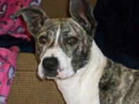 Boxer - Abigail - Medium - Young - Female - Dog ABIGAIL