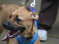 Boxer - Balboa - Large - Young - Male - Dog Hi! My name