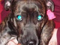 Boxer - Bella-courtesy Listing - Large - Young - Female