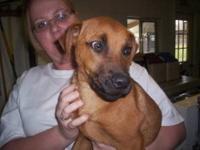 Boxer - Bongo - Medium - Young - Male - Dog Visit us at