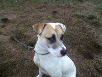 Boxer - Delilah - Large - Young - Female - Dog Delilah