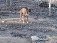 I have this male boxer he need a good home he has all