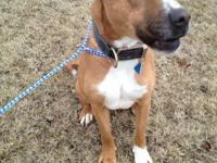 Boxer - Lyra - Rescue Only - Large - Adult - Female -