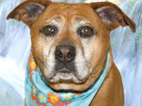 Boxer - Maggie - Large - Adult - Female - Dog Hello, Im
