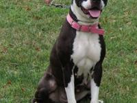 Boxer - Mckenzie - Large - Young - Female - Dog Meet