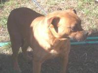 Boxer - Nala - Large - Adult - Female - Dog