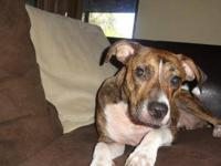 Boxer - Nala - Medium - Young - Female - Dog My name is