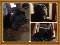 Terry is a 9 month old very playful, energetic, and