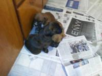 I have three boxer puppies ready for a loving family.