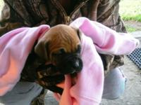 We have 2 litters of boxers for sale.1st litter was