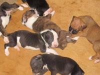 I have 9 Fighter Puppies that were born upon April 27th