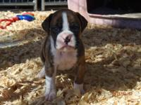 We have 4 young puppies available. (there are 6 in the