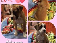 Boxer puppies available. One boy and one girl looking