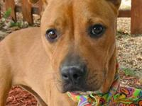 Boxer - Rosie - Large - Adult - Female - Dog Rosie is a