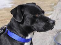 Boxer - Rudiger - Large - Adult - Male - Dog Rudiger is