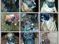 I have ten boxer puppies. 6 males and 4 females. Price