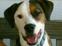 Boxer - Toby - Courtesy Post For Ron Lewis - Medium -