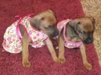The cutest pups you ever saw. Will be ready to go