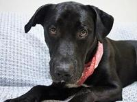 BOYD's story HSPC's adoption fee is $100 with an