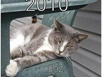Boz's story This loving senior is as sweet as they
