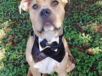 Brad's story This handsome gentleman is Brad! He is a