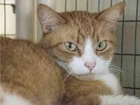 BRAD's story Brad is one orange tabby you''ll never