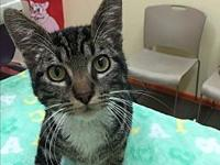 Bradley's story Super friendly 6 month old kitten needs