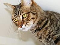 Bradley's story Looking for a name for your new cat or