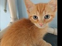 Bradley's story Sweet, playful young kitten. Bradley is