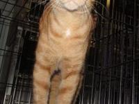 BRADY's story Brady is an orange male tabby who's at