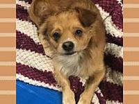 Brady's story Brady is a 2 year old pom mix, utd on